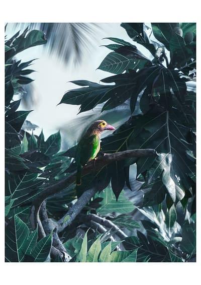 TROPIC BIRD 50×70